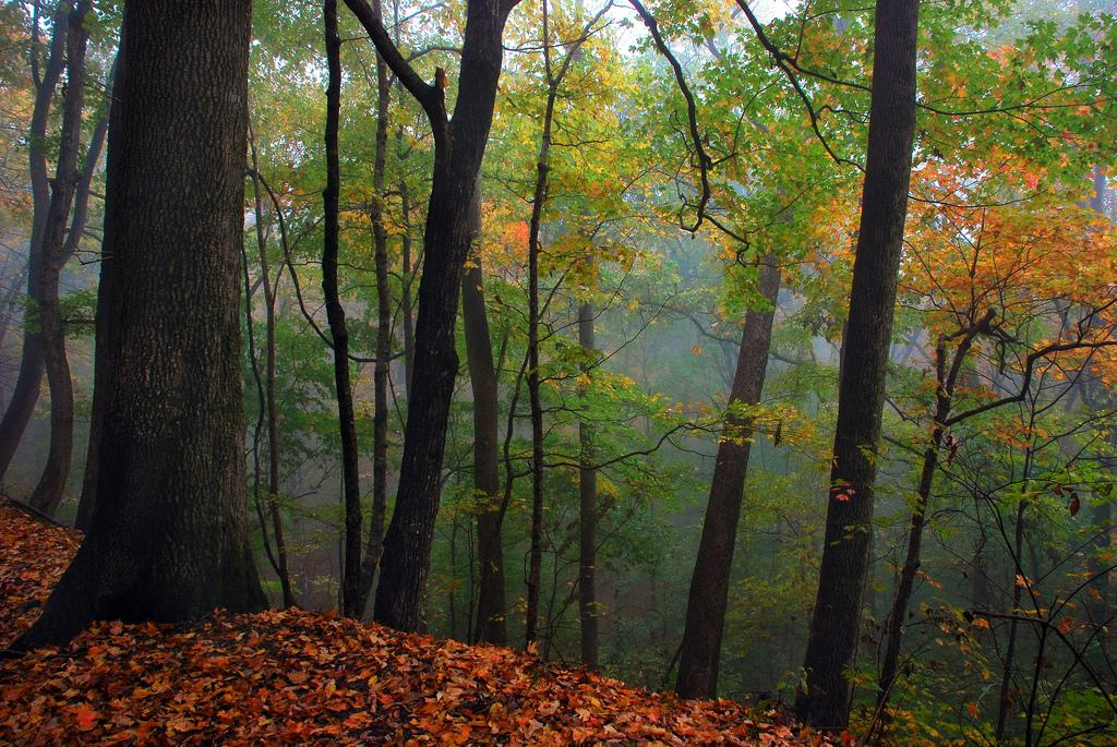 Monte Sano Autumn Fog by Wes Thomas